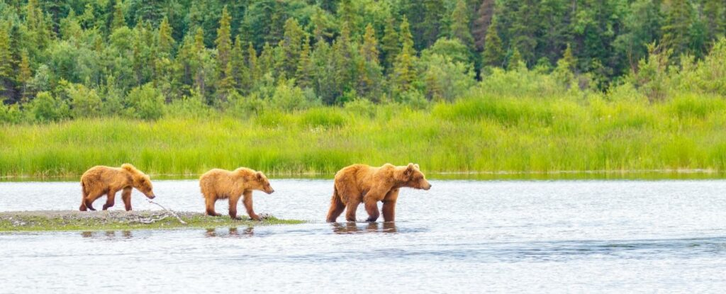 alaska is a favorite vacation idea for retirees