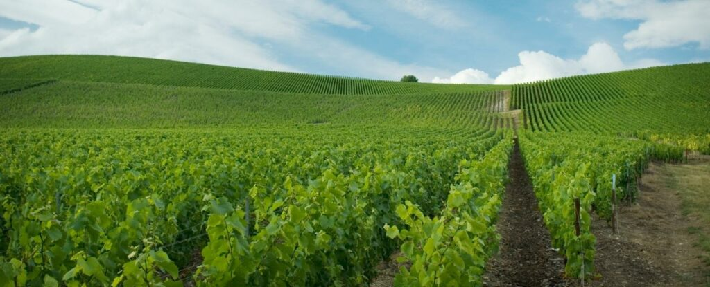 champagne france is a great vacation idea for retired couples