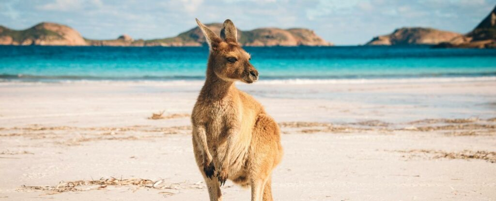 australia is a wonderful trip for retirees